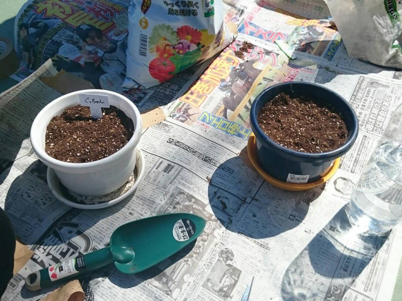種まきトップ
